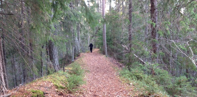 Foto Leo Oras. Grenforsens naturreservat
