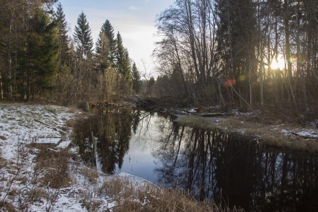 Foto Mats Holmberg. Tunomsbäcken. Utlopp Klingstatjärn i motljus.