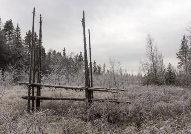 Foto Mats Holmberg Frostig äng vid Storforsen