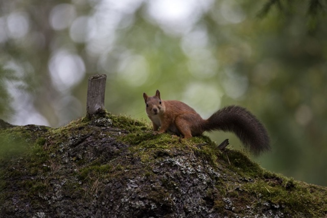 Photo Svanthe Harström Squirrel