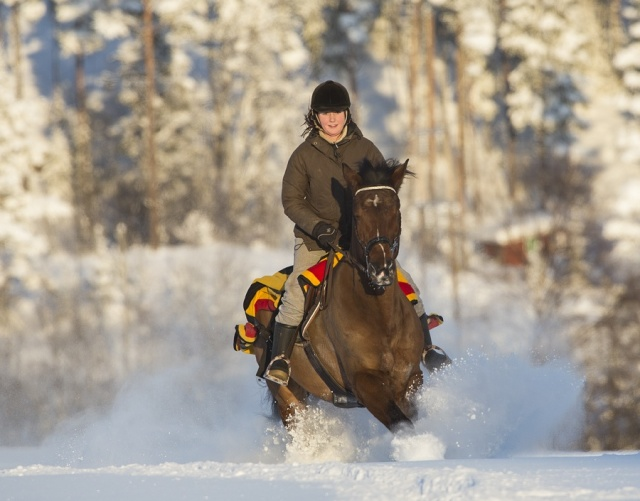 Photo Svanthe Harström Horse and rider in snow. Näset, Sweden