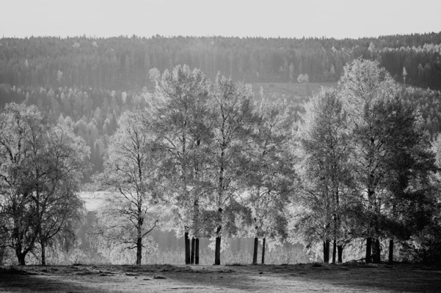 Photo Svanthe Harström Autumn trees, Näset, Sweden