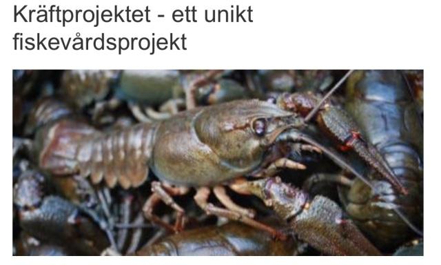 """Ånge kommuns hemsida om kräftprojektet! """"Kräftprojektet - ett unikt fiskevårdsprojekt."""" Se länk! http://www.ange.se/ange/1234.html"""