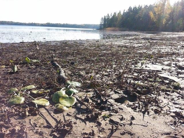 Sjön Yxern i Kalmar län. Oktober 2014. Foto Tino Åberg
