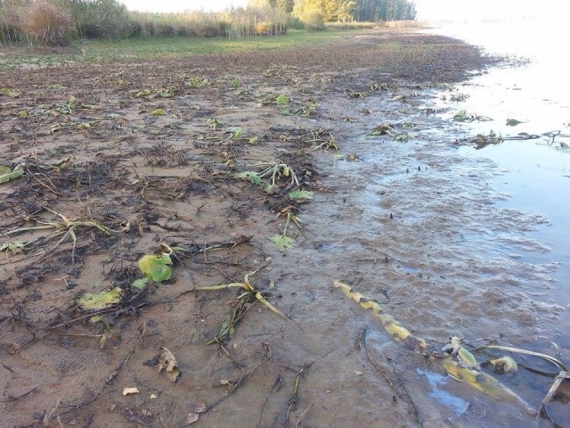 Foto Tino Åberg Sjön Yxern i Kalmar län Svårt skadad av småskalig vattenkraft